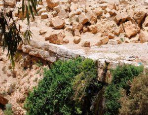 Ayoun Musa (Spring of Moses) 2
